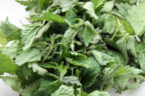 foods that increase serotonin, wild nettle, stinging nettle