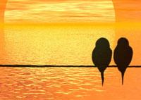 honeymoon effect image
