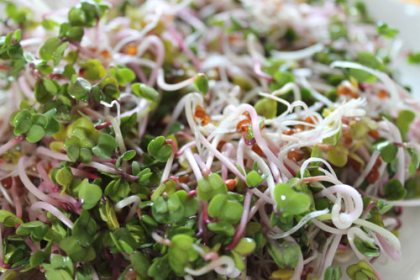 longevity now, radish sprouts