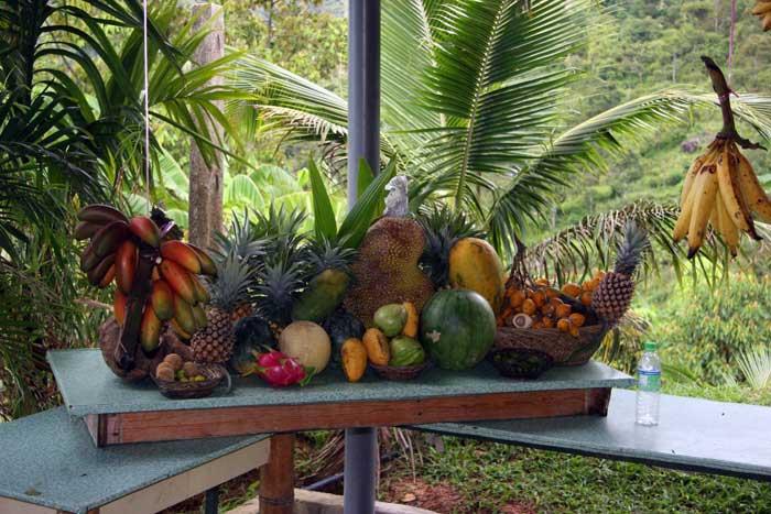 penang organic fruit farm, tropical malaysia image