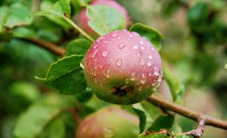 raw food diet, natural health