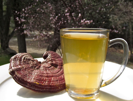 Reishi mushroom raw food tea -picture