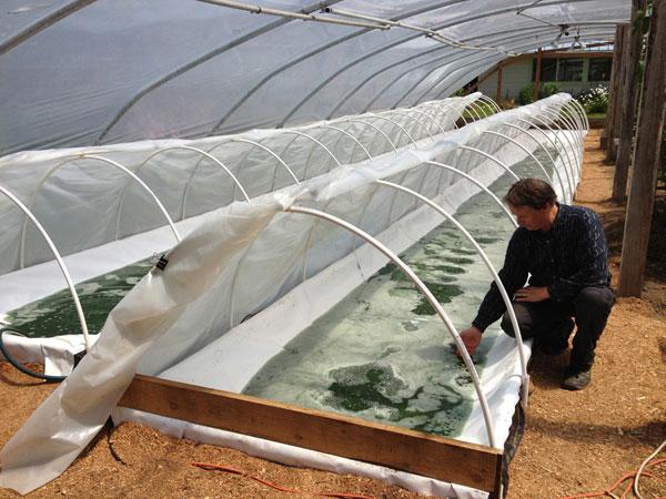 spirulina farm