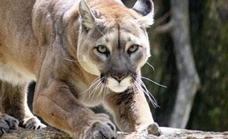 waking the tiger, natural healing, trauma