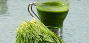 benefits of greens, wheatgrass juice, chlorophyll, ann wigmore, green juice