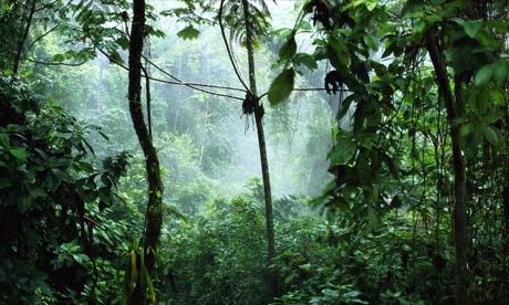 Amazon Rainforest Picture