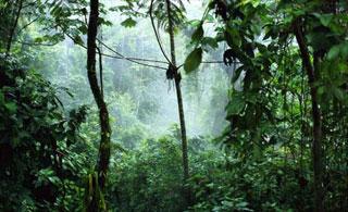 world is as you dream it, john perkins, rainforest, natural health