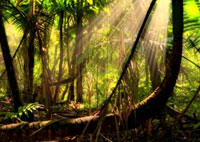 zero deforestation brazil by 2020 image, natural health news