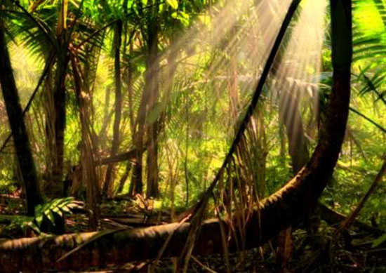 zero deforestation in brazilian Amazon possible by 2020 - image